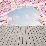 Blossoming белые цветки дерева Стоковые Фотографии RF