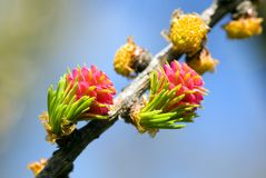 blossoming близко вверх Стоковое фото RF