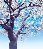 blossoming вал вишни Стоковая Фотография