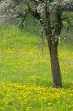 blossoming вал лужка стоковое изображение rf