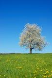 blossoming вал Стоковые Изображения