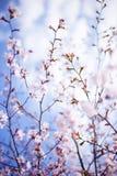 blossoming вал стоковое фото rf