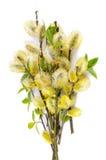 Blossoming верба Стоковые Фотографии RF
