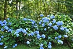 Blossoming весной Стоковые Изображения