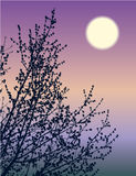 blossoming ветви Стоковые Изображения RF