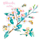 Blossoming ветвь Весна Стоковые Фотографии RF