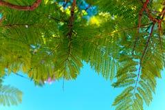 Blossoming ветвь дерева на заходе солнца или восходе солнца Стоковое фото RF