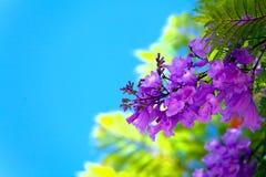 Blossoming ветвь дерева на заходе солнца или восходе солнца Стоковые Фото