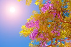 Blossoming ветвь дерева на заходе солнца или восходе солнца Стоковое Фото