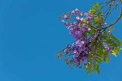 Blossoming ветвь дерева на заходе солнца Стоковое Изображение