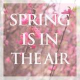 Blossoming ветвь персика, весна в воздухе Стоковые Изображения