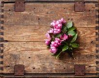 Blossoming ветвь розовой яблони стоковые фото
