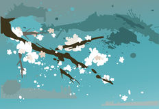 blossoming вишня ветви Стоковое Изображение