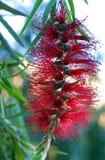 Blossoming дерево Стоковые Фотографии RF