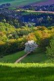 Blossoming дерево Стоковые Изображения