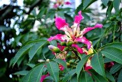 Blossoming дерево Стоковое Изображение