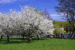 Blossoming деревья на речном береге. Стоковые Фотографии RF