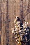 blossoming желтый цвет вербы весны цветков Ветви вербы с пушистыми почками Стоковые Изображения RF