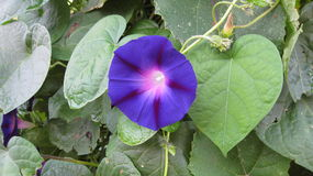Blossoming заводов цветков Стоковое Изображение