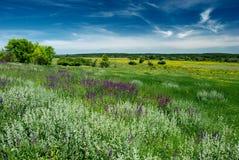blossoming ландшафт поля Стоковые Изображения