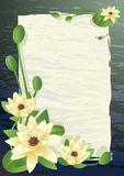 blossoming лотос Стоковое Изображение RF