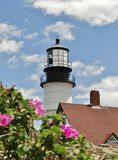 Blossoming маяк Стоковые Изображения
