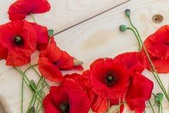 Blossoming одичалые маки на светлой деревянной предпосылке Обои, Стоковые Изображения RF