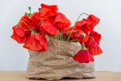 Blossoming одичалые маки на светлой предпосылке Обои, Стоковое Изображение RF