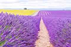 Blossoming поля лаванды и солнцецвета в Провансали, Франции Стоковые Изображения RF