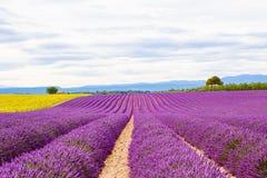 Blossoming поля лаванды и солнцецвета в Провансали, Франции Стоковые Фотографии RF