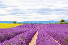 Blossoming поля лаванды и солнцецвета в Провансали, Франции Стоковые Фото