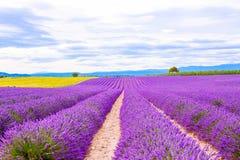 Blossoming поля лаванды и солнцецвета в Провансали, Франции Стоковое фото RF