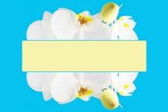Blossoming рамка цветка орхидеи Стоковая Фотография