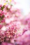 Blossoming розовые цветки Стоковые Фотографии RF
