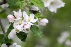 Blossoming сады весной Зацветая деревья сада желтый цвет весны лужка одуванчиков предпосылки полный Сад весны на солнечном свете  стоковое фото