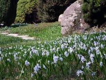 Blossoming лужок Стоковые Фотографии RF