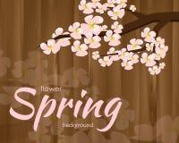 Blossoming хворостина вишни Стоковые Фотографии RF