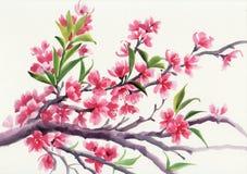 Blossoming хворостина иллюстрация штока