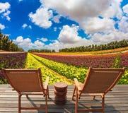 Blossoming лютик сада Стоковые Фото