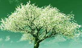 Blossoming Stock Images