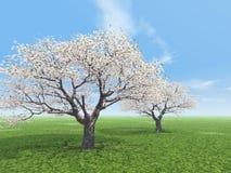 blossoming Zdjęcie Royalty Free