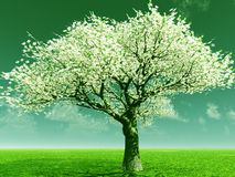 Blossoming Royalty Free Stock Photo