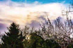 Blossoming деревья Стоковые Фото