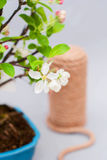 Blossoming apple bonsai with tools on a light gray background. Royalty Free Stock Photos