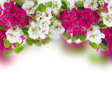 Blossoming Apple and cherry tree Flowers Royalty Free Stock Image