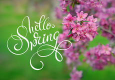 Blossoming apple-tree on a background of green grass and text Hello Spring. Calligraphy lettering Stock Photo