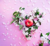 Blossoming apple tree branch and apple on a pink wooden background Royalty Free Stock Photos