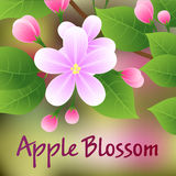 Blossoming apple tree branch with pink flowers. Vector Stock Image