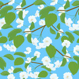 Blossoming Apple Tree spring Twig pattern on blue. Blossoming spring Apple Tree branch seamless square pattern on blue background Stock Images