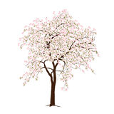 The blossoming apple-tree in the spring. On a white background Stock Images